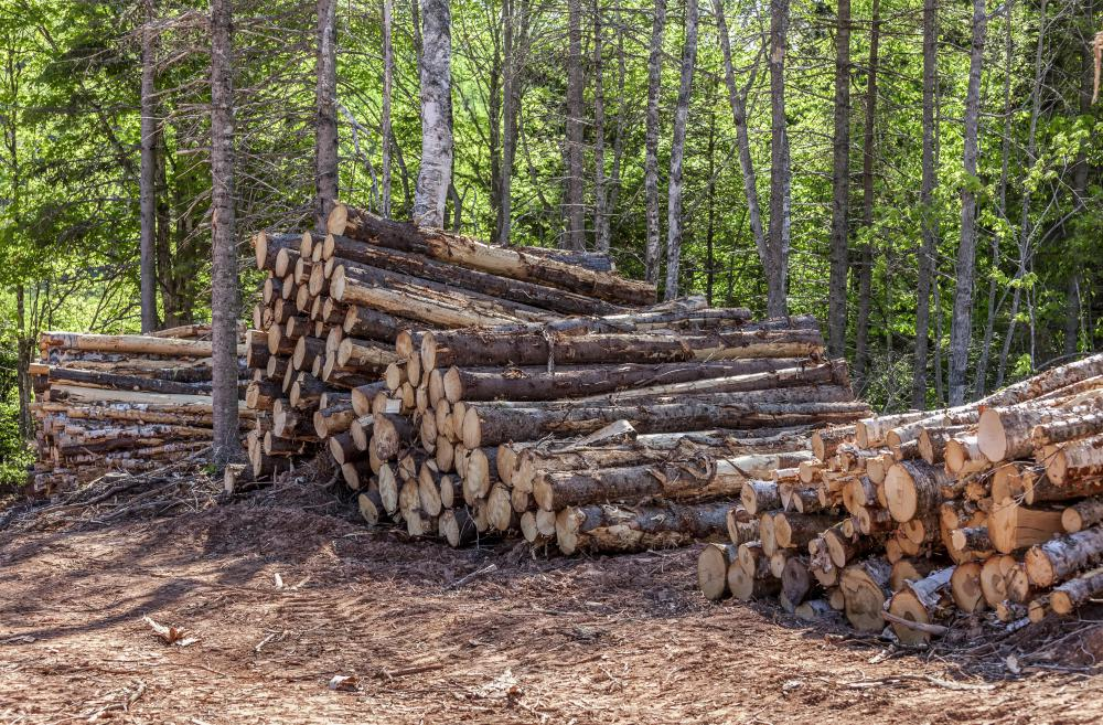 Natural resources, such as timber, would remain in the common under Georgism.