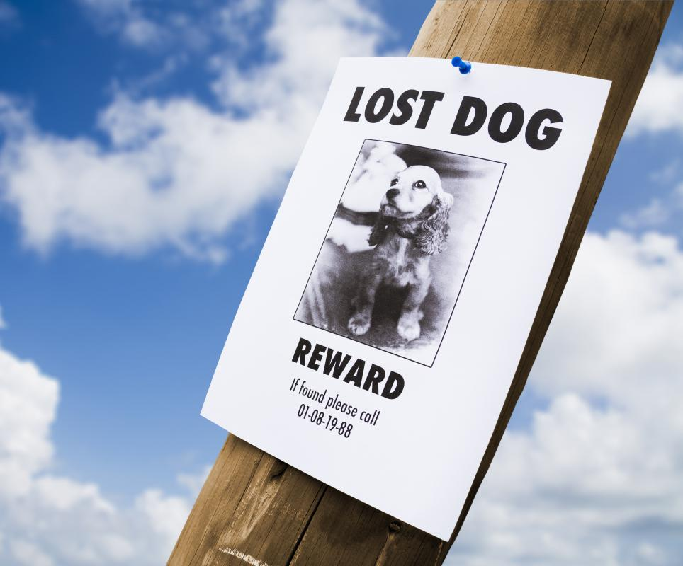 GPS tracking technology can help find a dog if it gets lost.