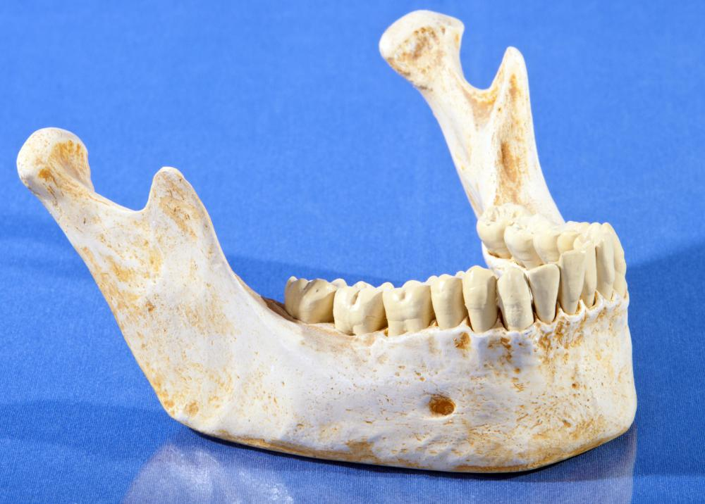 A dental expert witness can examine human remains to identify a person.