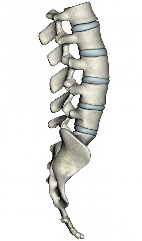 Facet joints work in collaboration to allow movement of the spine.