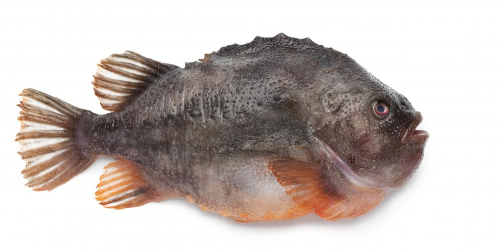 Lumpfish, like Atlantic cod, is a type of fish typically found in the North Atlantic Ocean.