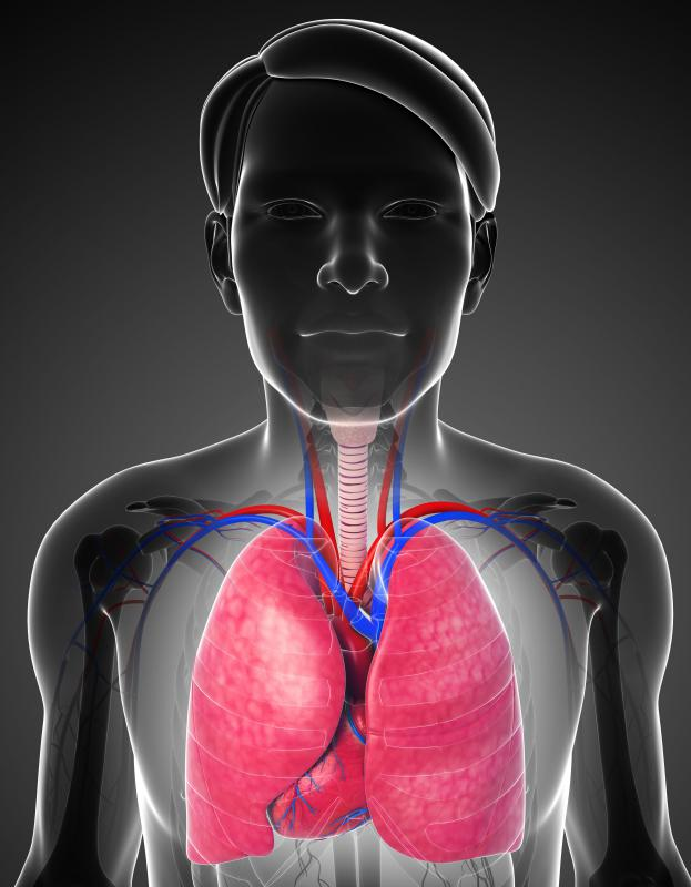 Pleura refers to the cavity that surrounds and protects the human lungs.