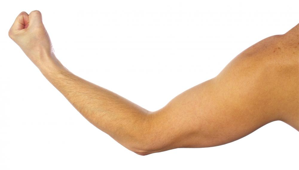 The teres major assists in movements of the arm.