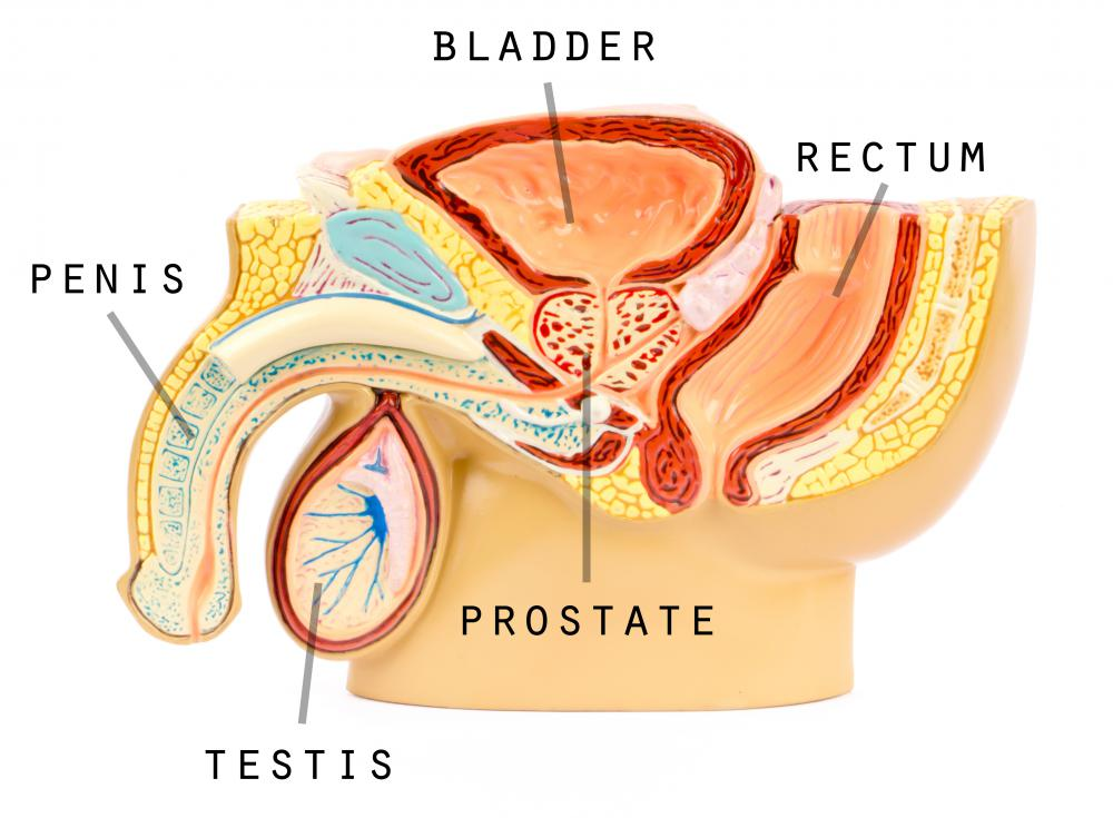 In men, an enlarged prostate may lead to infection.