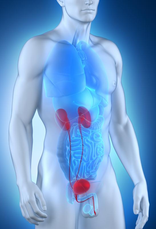 Fibromuscular hyperplasia commonly affects the renal arteries.