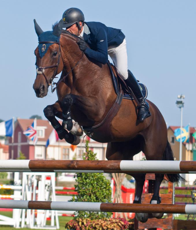 Although known for their racing abilities, Thoroughbred hot-blooded horses are also quite adept at jumping.