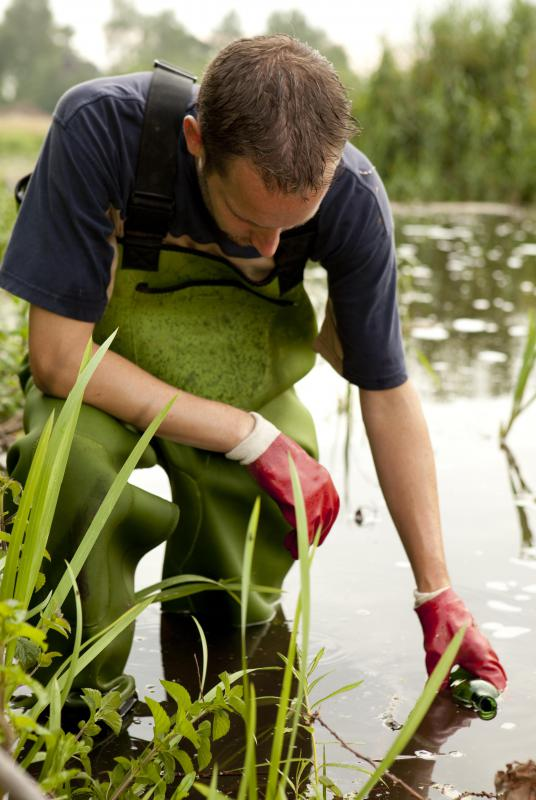 An ecologist may take water and mud samples as part of a wetlands study.