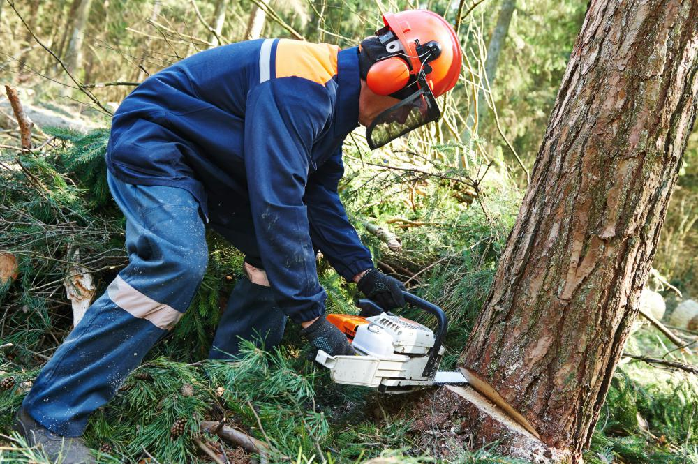 The typical method of removing a tree involves using a chainsaw.