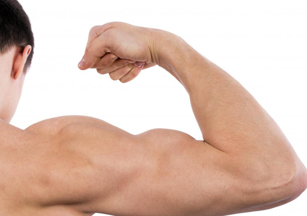 The bicep makes up approximately one-third of the mass of the upper arm.