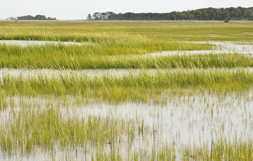 Flora means the plants, algae and fungi of an area, such as the grass in a marsh.