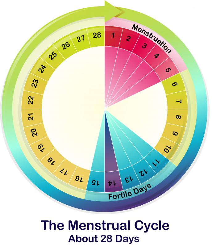 Pheromone exchange between women may cause their menstrual cycles to synchronize.