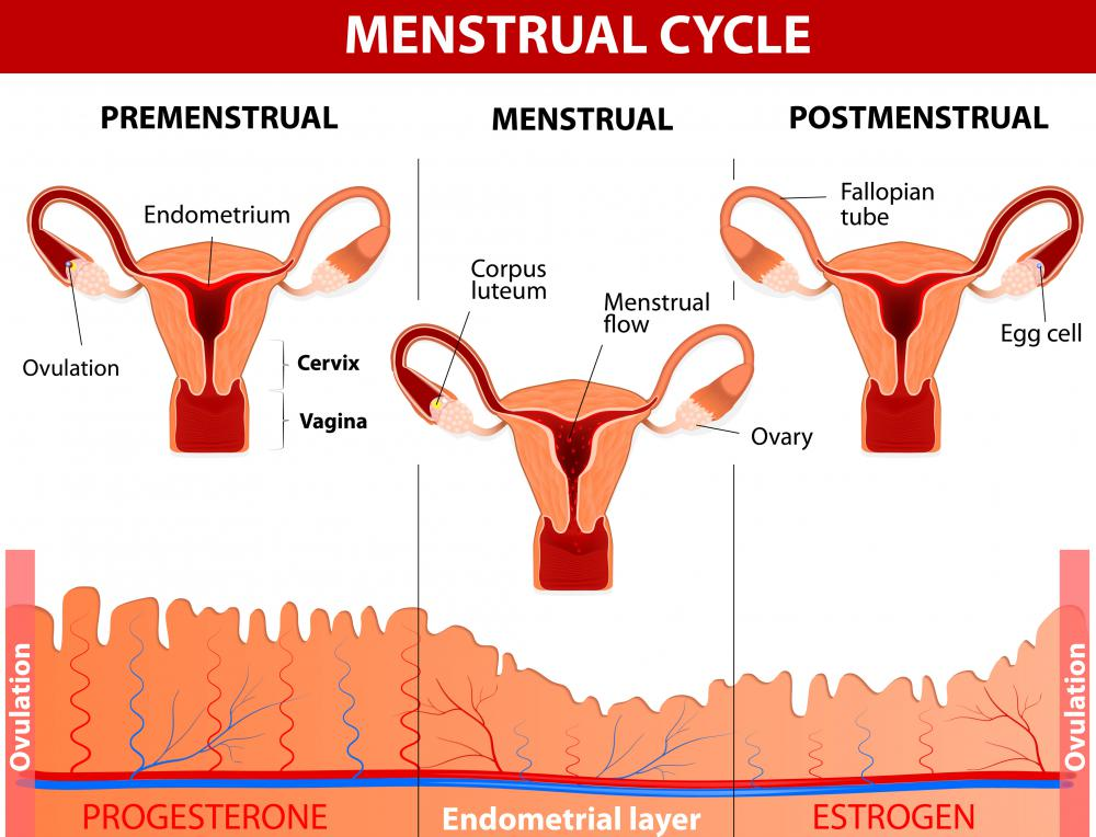 It is normal for a woman's cervical mucus to change throughout her menstrual period.