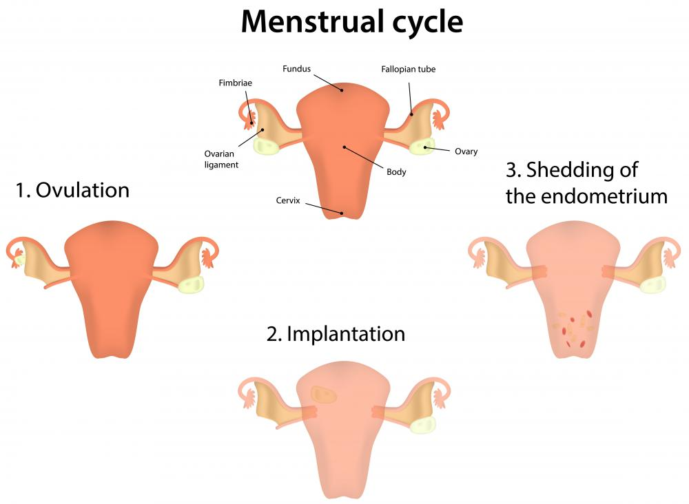 In endometial cancer, the uterine lining, known as the endometrium, begins to experience uncontrolled cell growth.