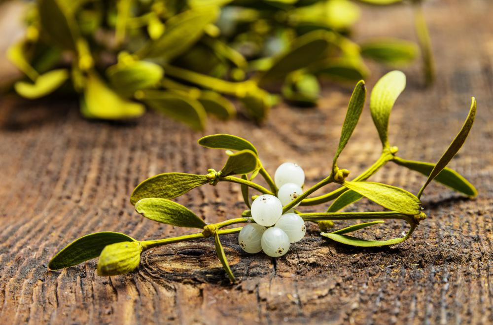 Mistletoe has been used by herbalists to treat respiratory and circulatory problems.
