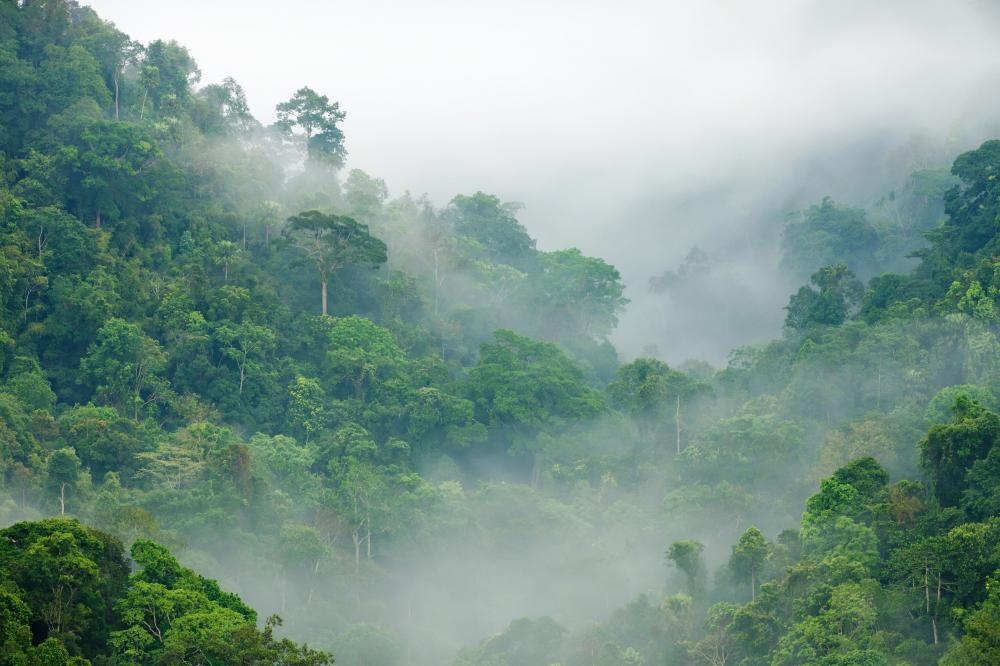 Rainforest covers only 6 percent of the Earth, but an estimated half of the planet's plant and animal species live in rainforest.