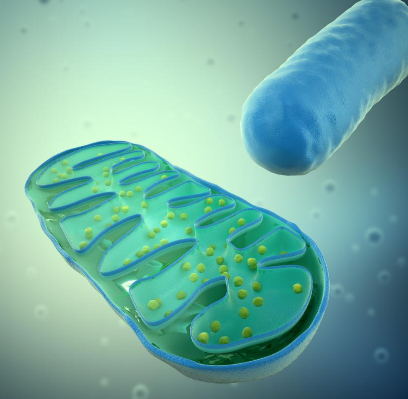 MELAS syndrome is believed to be related to a mutation in mitochondrial DNA.