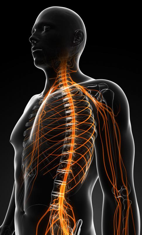 Damage to spinal nerves may occur as a result of injury.