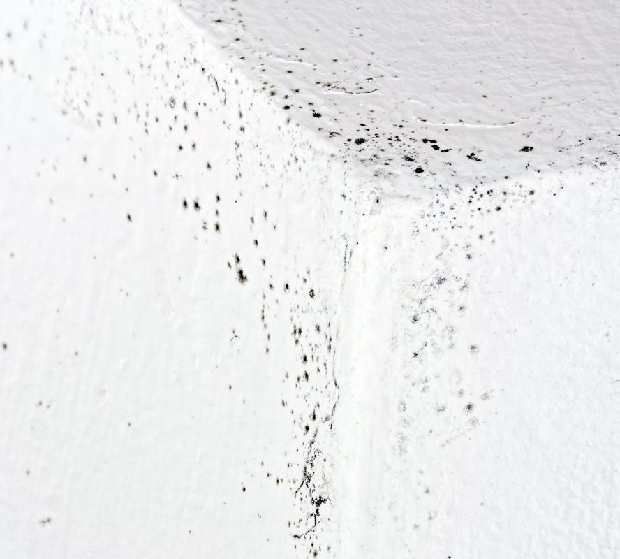 A weep screed may be installed as a preventative measure against mold.