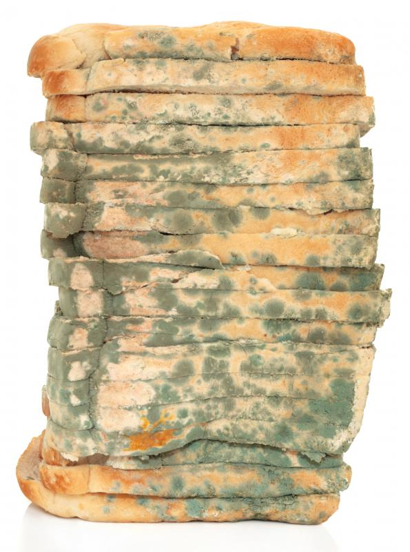 Moldy bread can be used to feed worms.