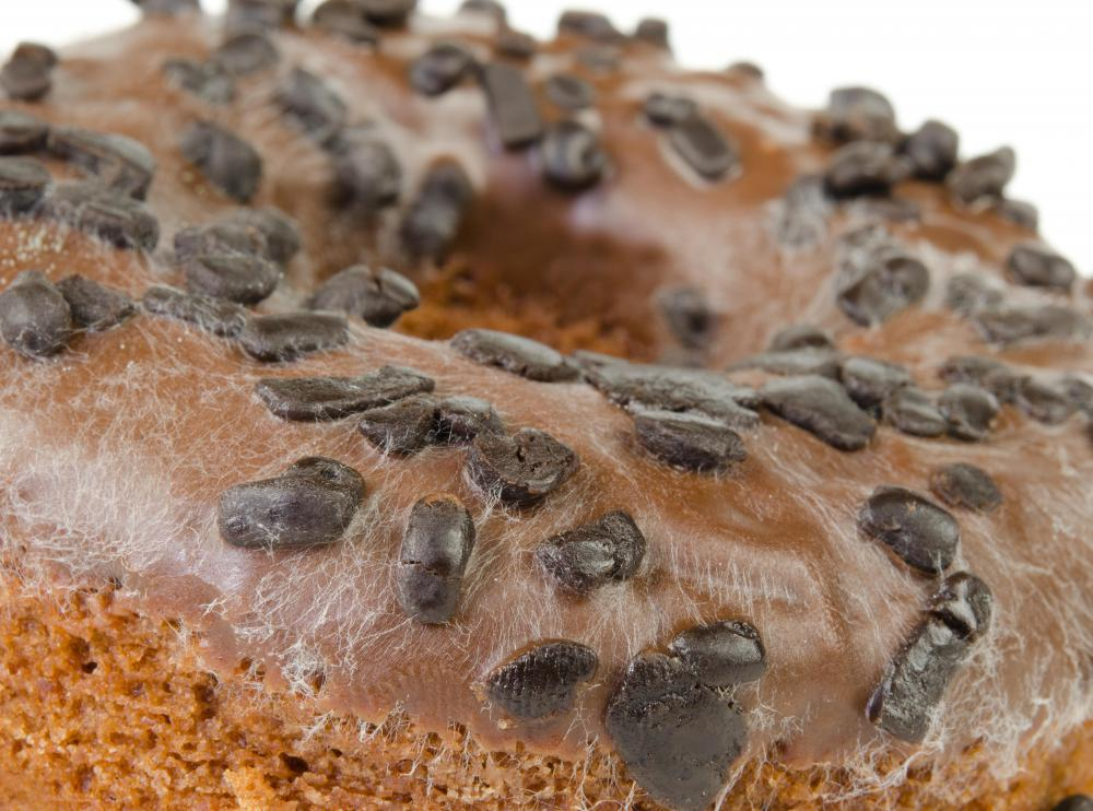 Mold that is found on old or unrefrigerated bread comes from fungi.