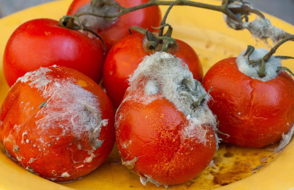 Any vegetables containing mold should be thrown away to prevent illness.