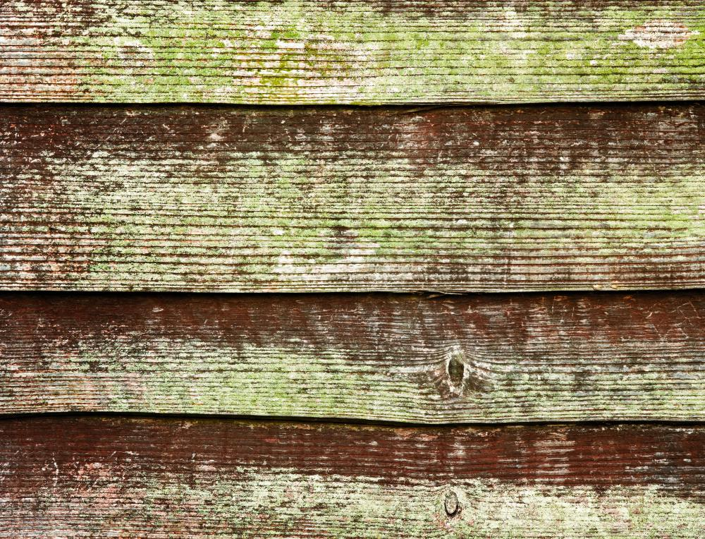 Leaving wood exposed to the elements may cause mold to form.