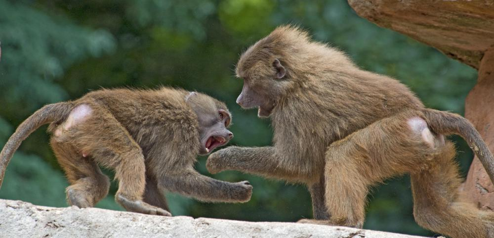 Animal scientists may study animal aggression.