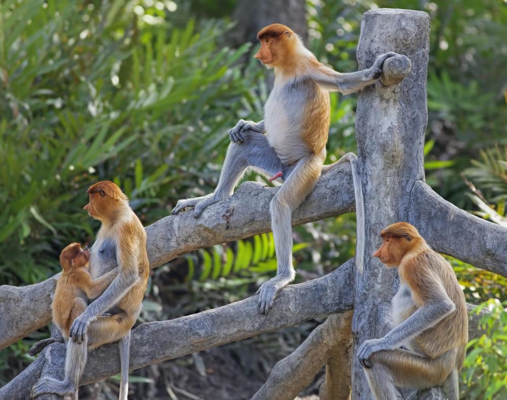 There are over 200 different species of monkey.