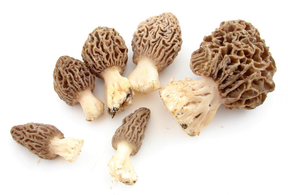 Morel mushrooms are rare and popular in gourmet cooking.