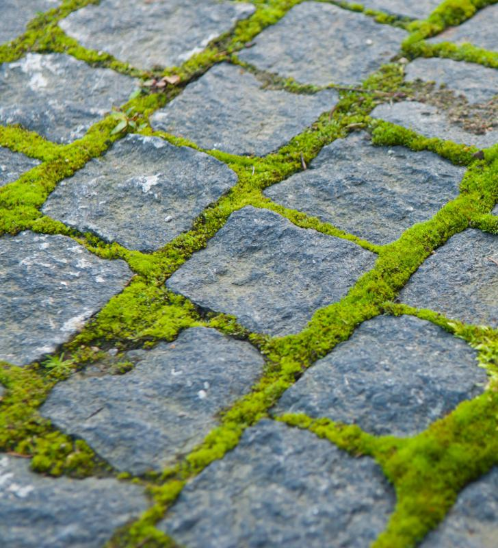 Moss growing between cobblestones outside of a carriage house.