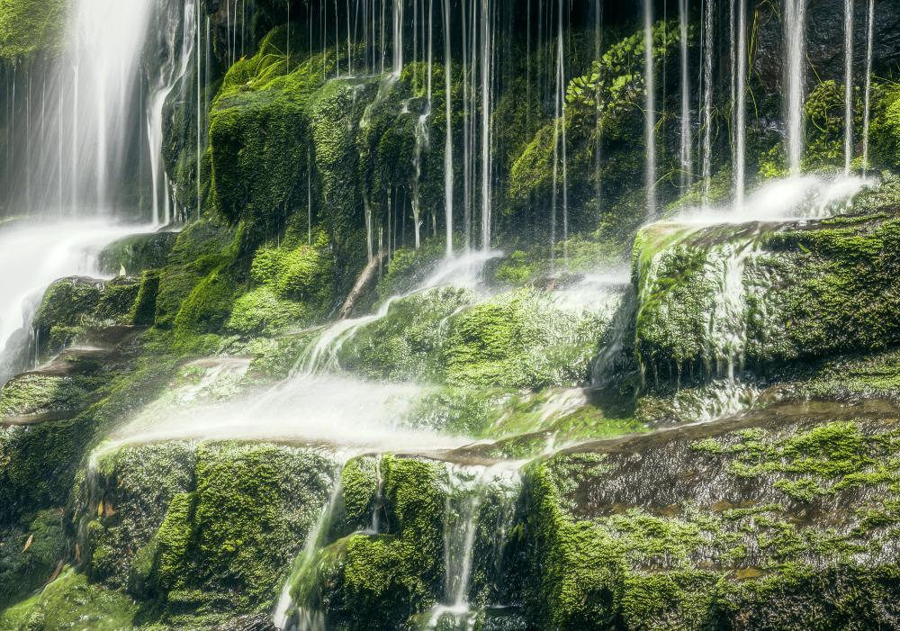 A photograph of a waterfall in Tasmania. Many nature photographers work freelance.