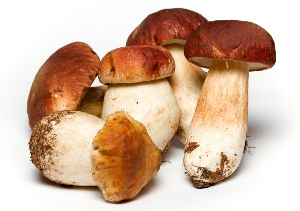 Mushrooms use extracellular digestion, as they secrete enzymes that break down food that is then absorbed during their growth.