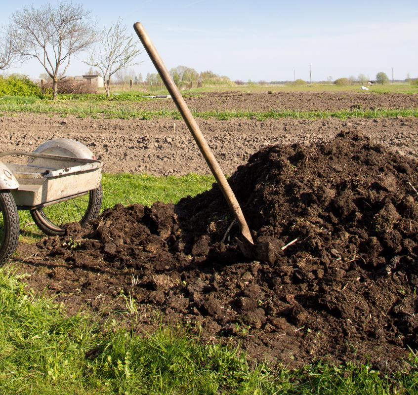 Animal manure can be used as fertilizer in an organic agriculture operation.