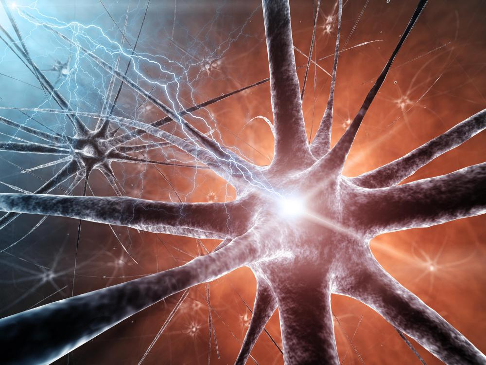 Neurons break down in neurodegenerative diseases.