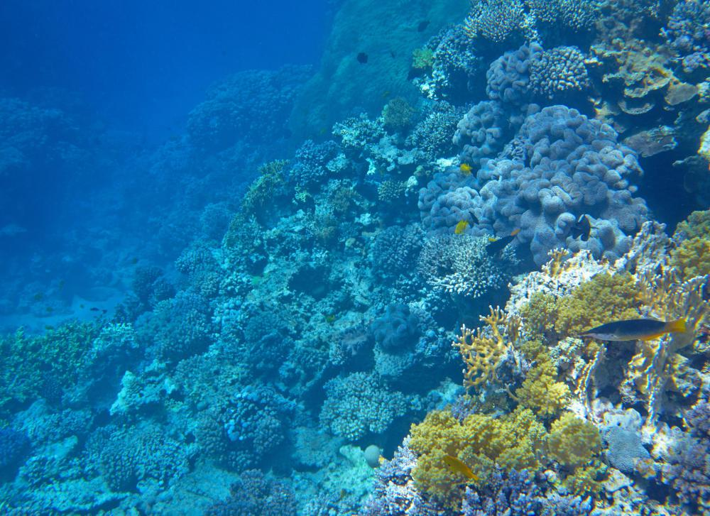Skin divers may check out coral rock beds up close in shallow waters.