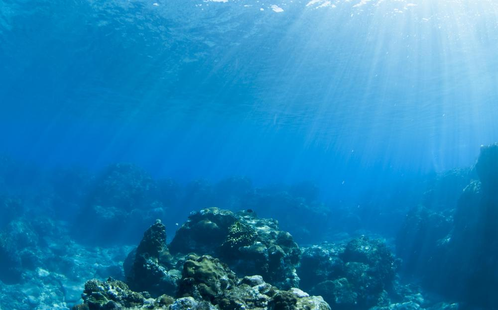 Ocean researchers study the best ways to keep the ocean healthy.