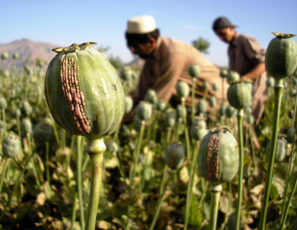 Opiates are any sort of drug that originate from the Asian poppy plant.