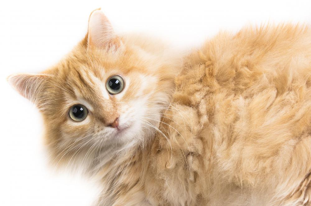 Pet stylists are recommended for cats with long hair.