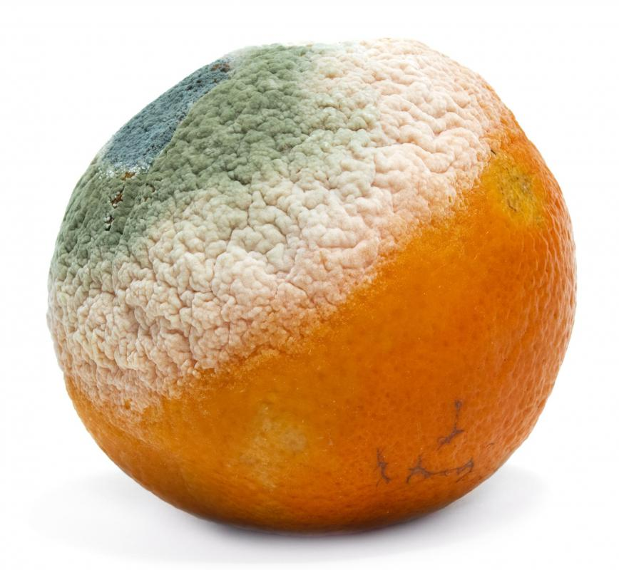 Mold On Oranges