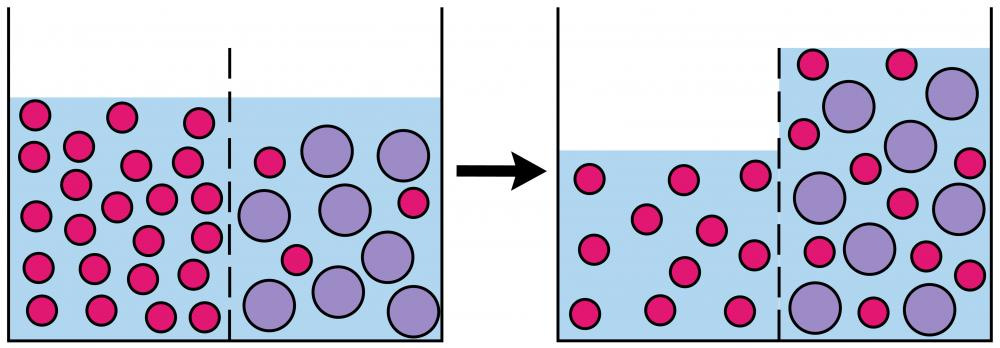 The process by which molecules pass through a membrane is called osmosis.
