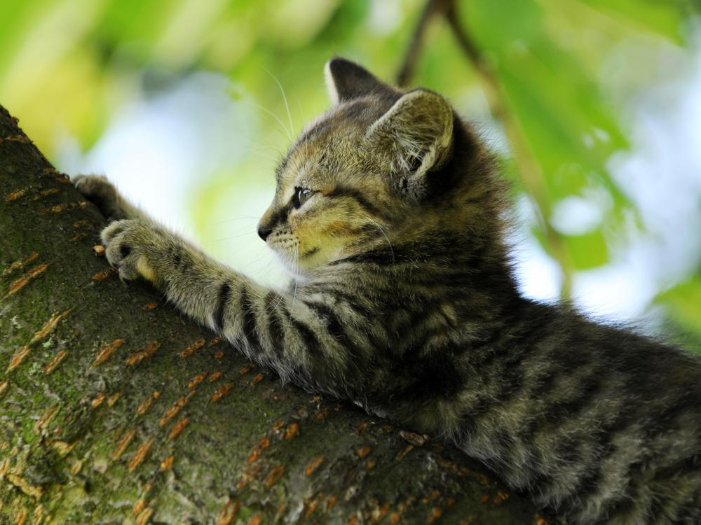 [Image: outdoor-cat-in-tree.jpg]