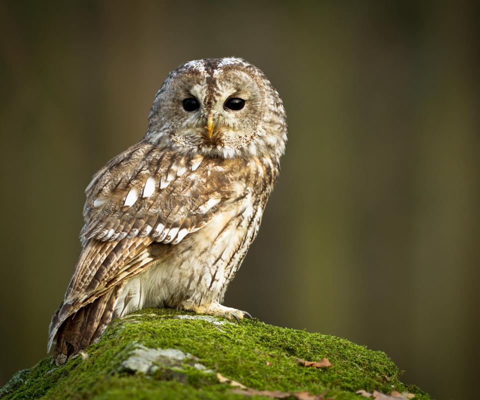 Owls are one of the unusual creatures often seen only at night.