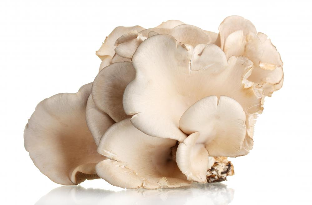 Oyster mushrooms are considered gourmet.