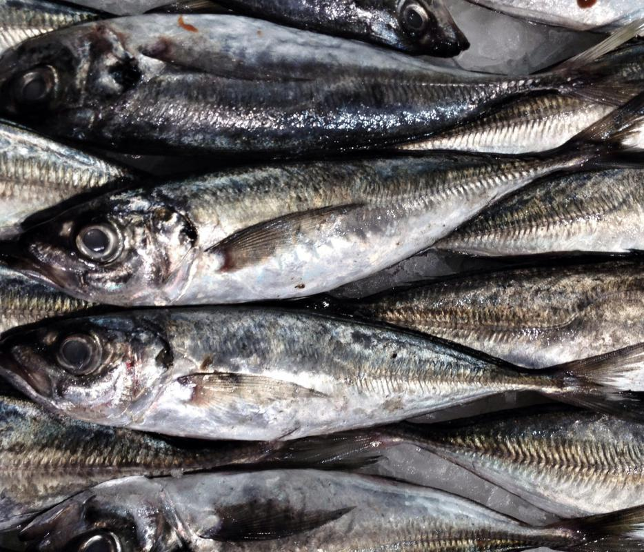 Small, herring-like fish called sardines provide oil with nutritional benefits.
