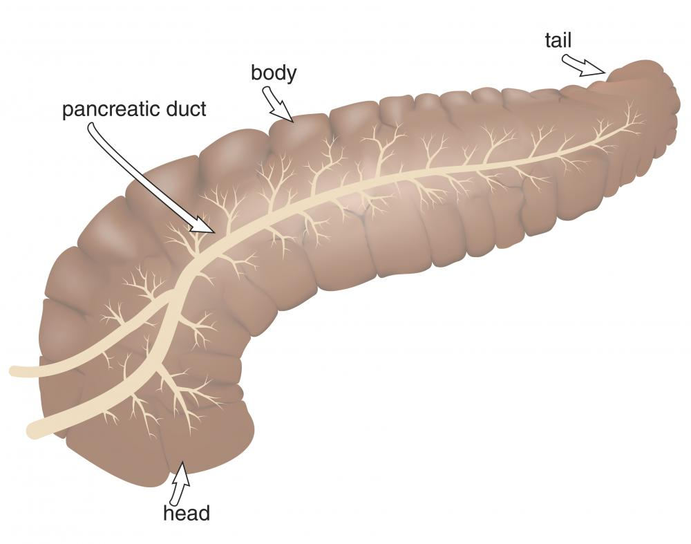 The main pancreatic duct leads directly to the small intestine.