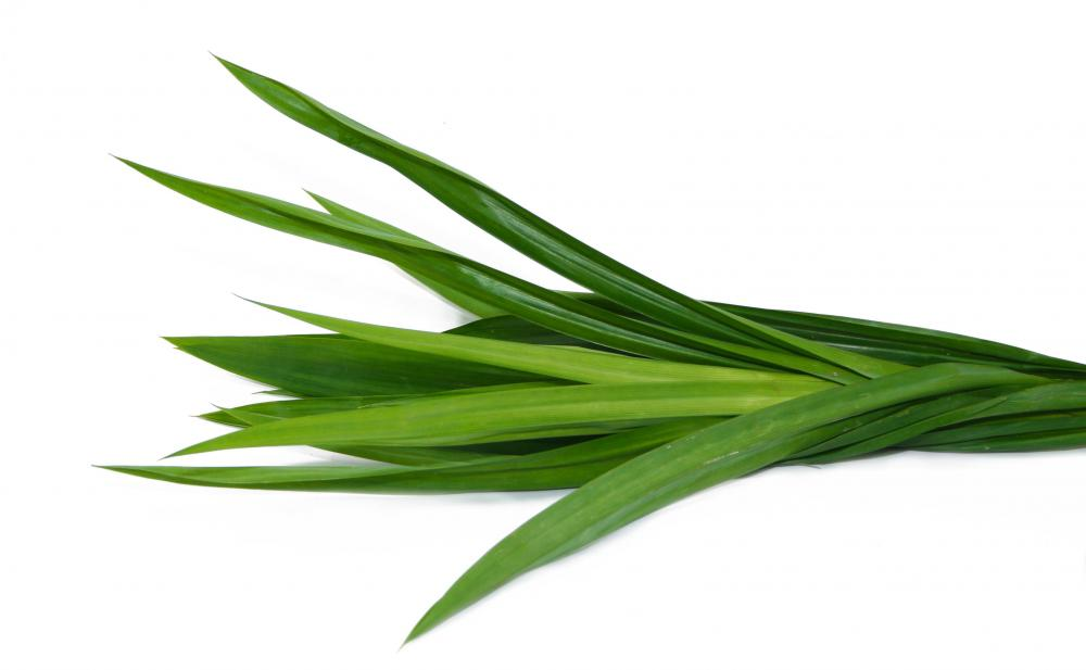 What is Pandan Leaf? (with pictures)