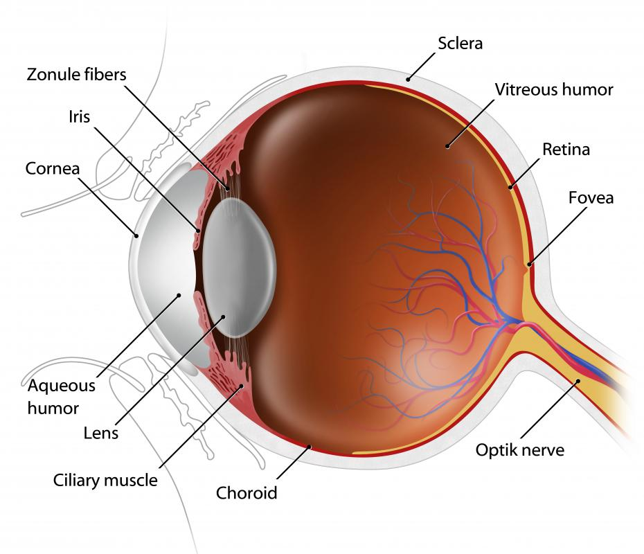 The retina is a lining of tissue located at the back of the eye, which is sensitive to light.