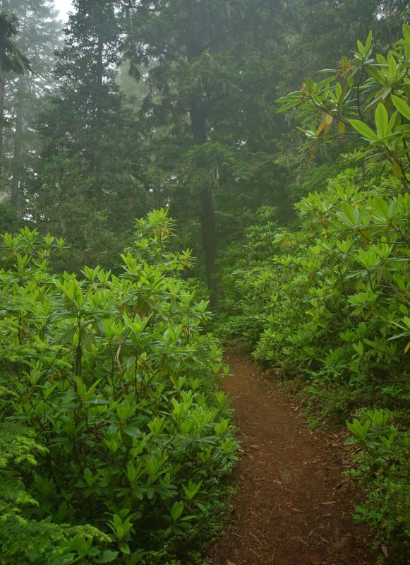 Hiking trails make it easy to enjoy a trip through wilderness.
