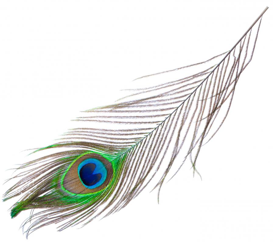 A male peacock's tail is used to attract a mate.