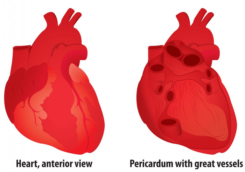 At the back of the anterior mediastinum is the pericardium, which is a thick enclosure that contains the heart.